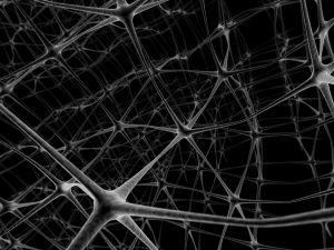 Viaggi nell'aldilà. Neuroni