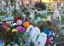 casa-rosa-cimitero-per-animali-roma